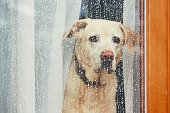 istock Sad dog waiting alone at home 914527762