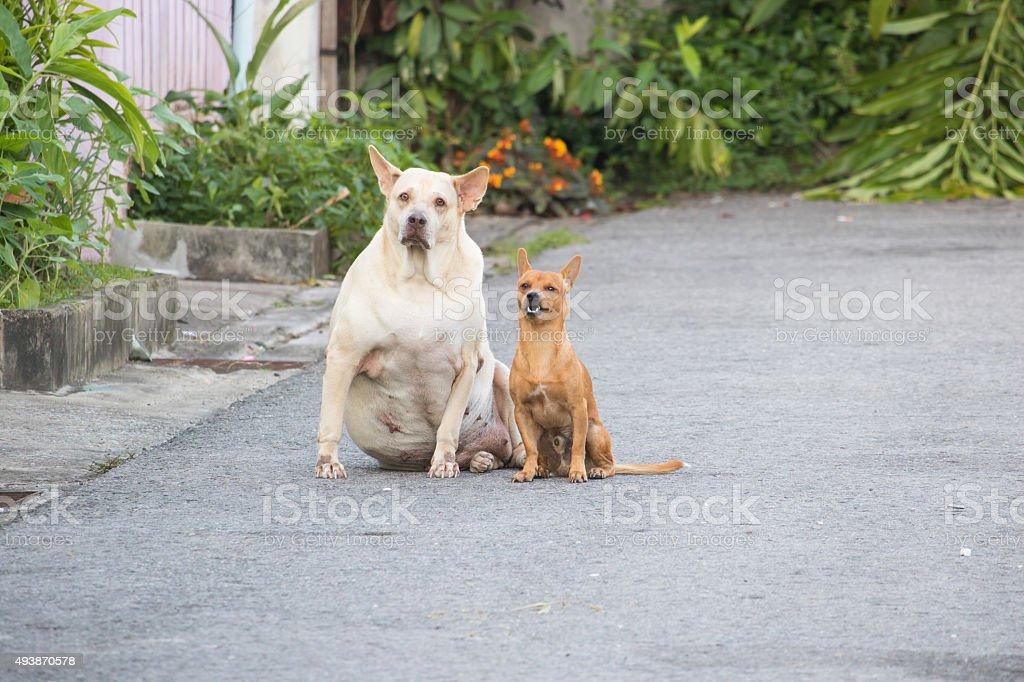 Sad dog with a friend. stock photo