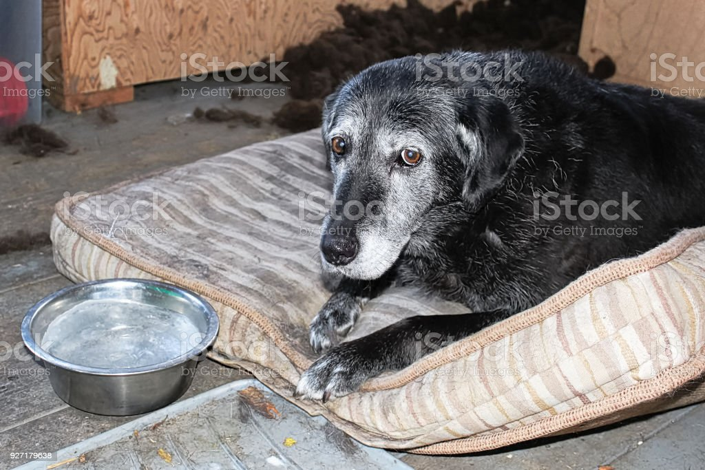 A sad dog with a frozen water bowl stock photo
