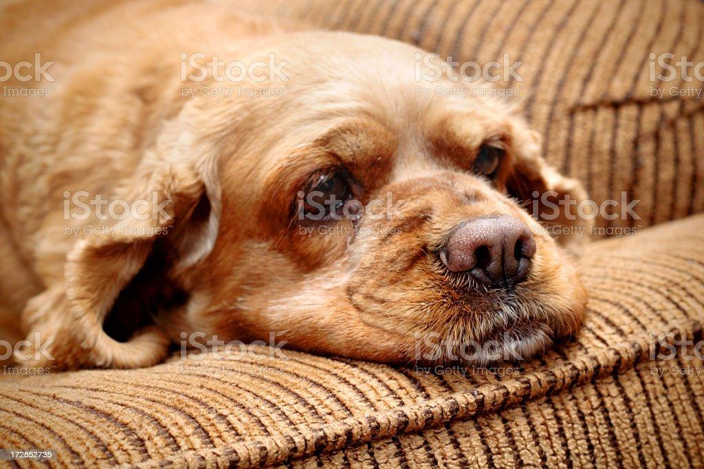 Sad Doggy stock photo