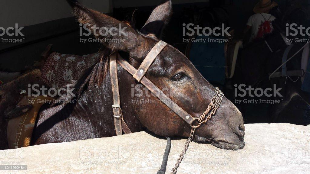 Sad donkey, Lindos, Rhodes, Greece – zdjęcie