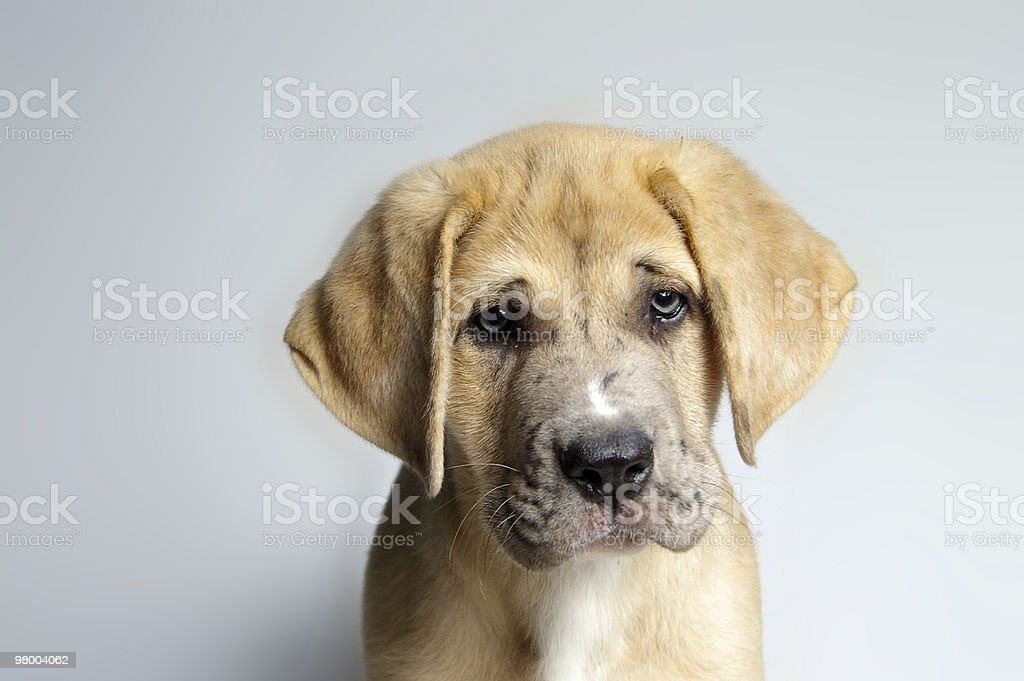 Sad Eyes royalty-free stock photo