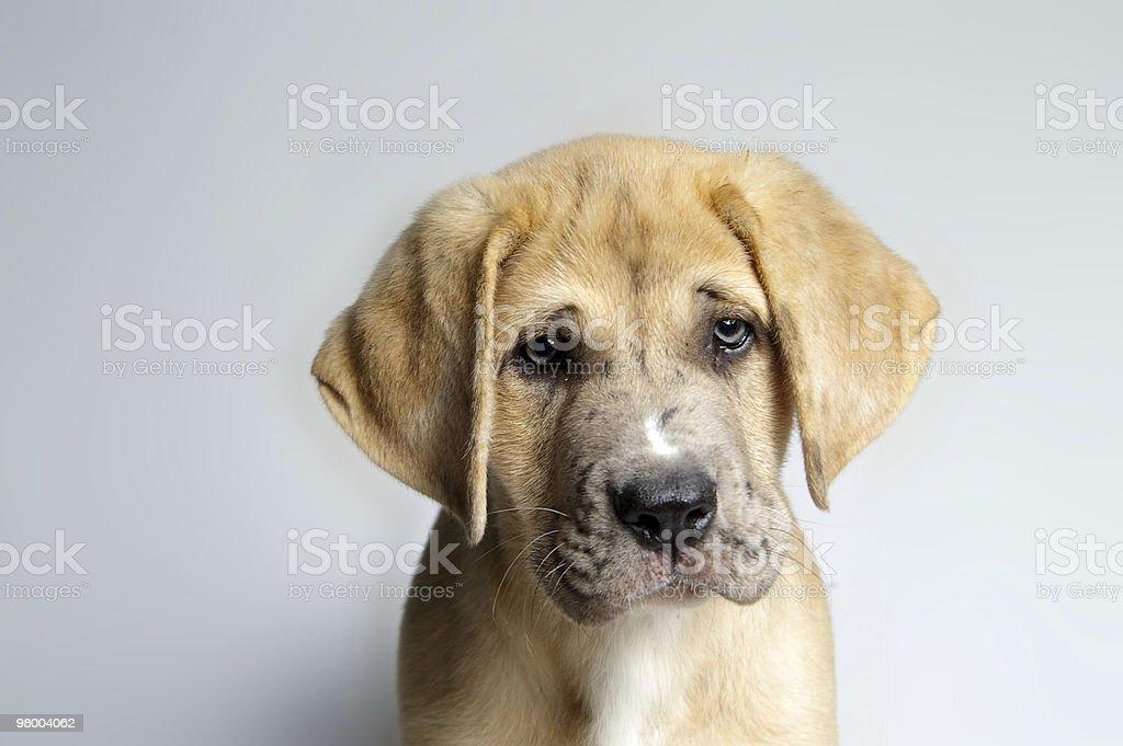 Sad Eyes stock photo