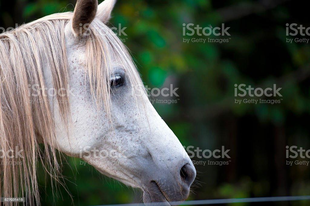 Sad fate Horses profile sad horse stock photo