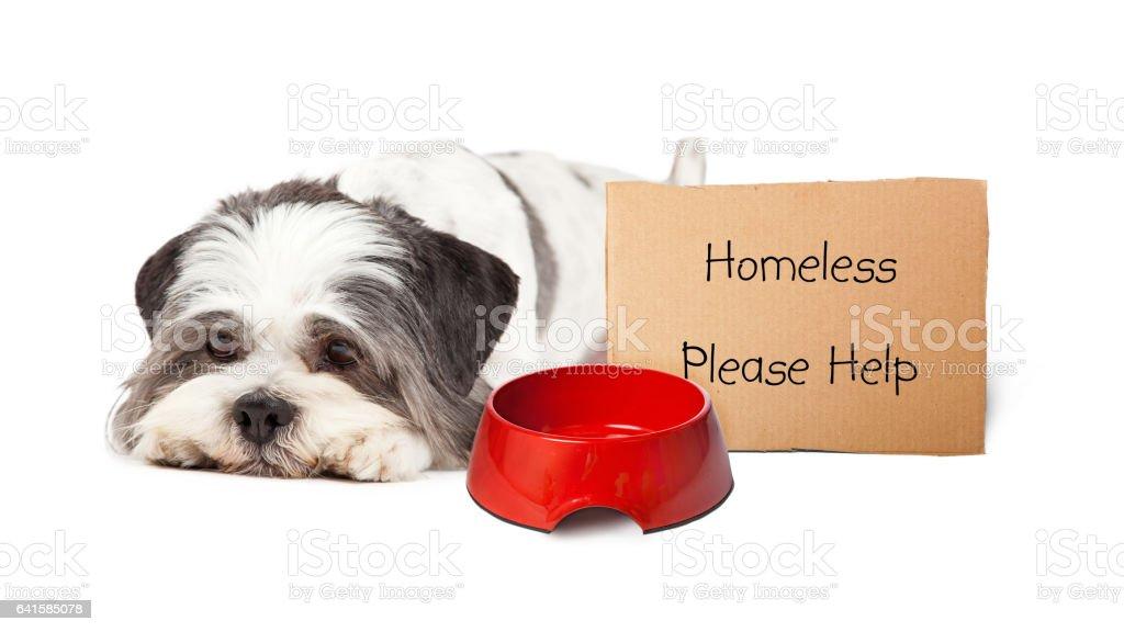 Sad Homeless Dog stock photo