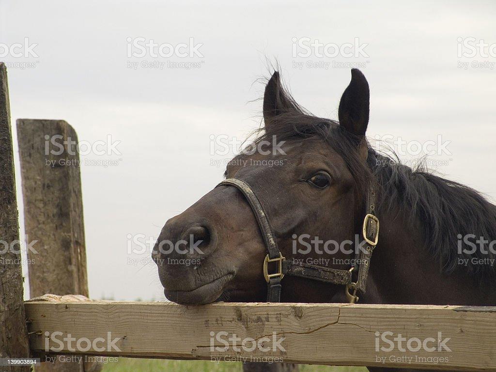 Sad Horse Portrait stock photo