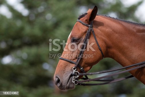 Profile view of a sad horseCanon 5D Mkii with 300mm F4 lensMake sure that you look at my others images!