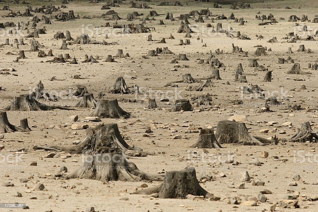 Sad image showing the increase in deforestation stock photo