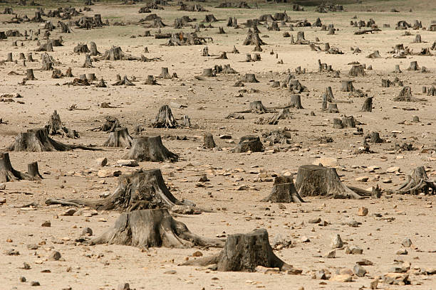 Sad image showing the increase in deforestation Destructed forest deforestation stock pictures, royalty-free photos & images