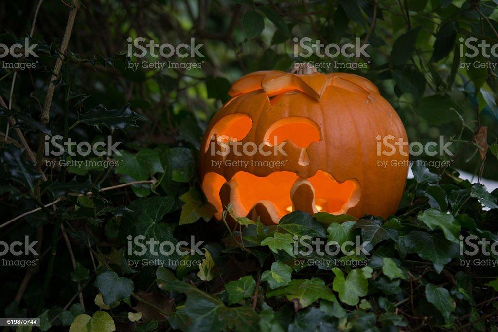 Sad Jack O'Lantern in a hedge stock photo