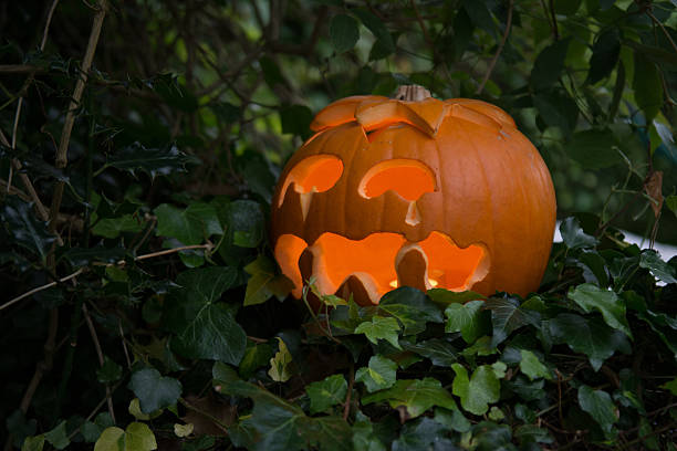 Sad Jack O'Lantern in a hedge stock photo