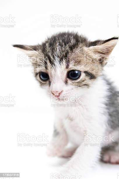Sad kitten isolated on white studio background picture id173037318?b=1&k=6&m=173037318&s=612x612&h=jjeqhwqbrzfm4sqa1gud4pxs41vsiei d gpy4bh0zm=