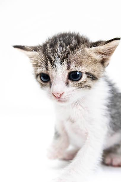 Sad kitten isolated on white studio background picture id173037318?b=1&k=6&m=173037318&s=612x612&w=0&h=8q8gmrxbfc7w5ty4ak v6w2wslmjcssxf0ehsh6eepa=