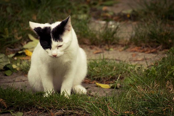 sad little cat - deplorable stock pictures, royalty-free photos & images