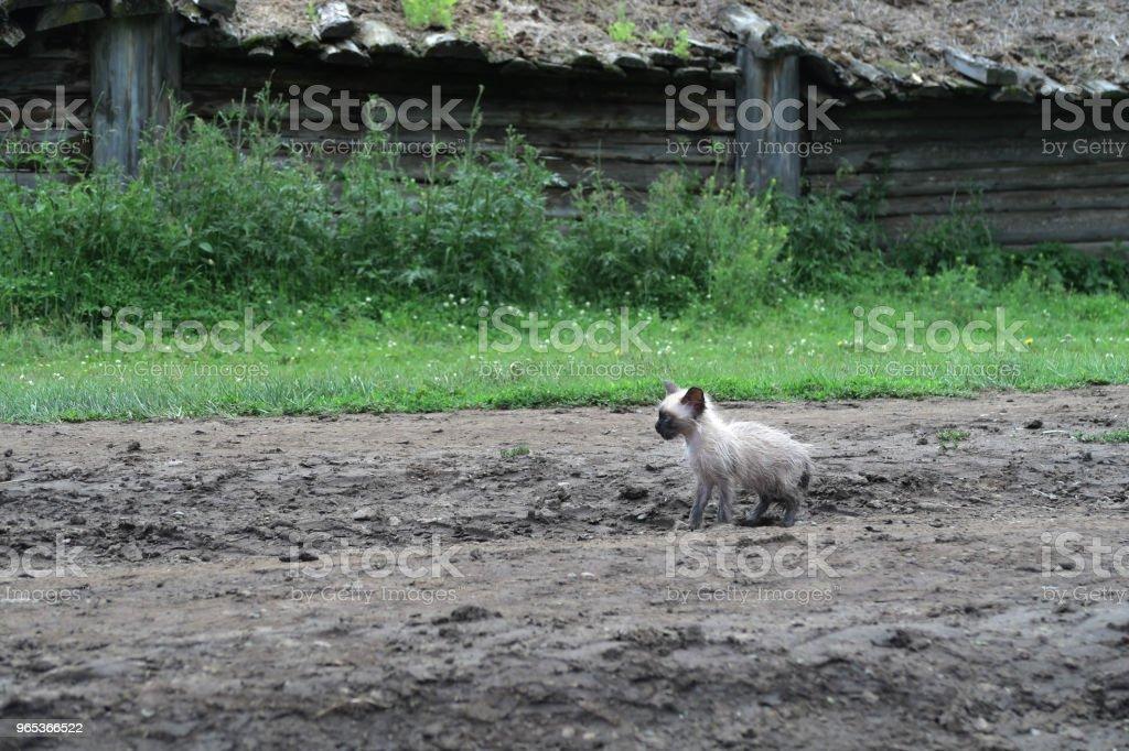 Sad lonely kitten zbiór zdjęć royalty-free