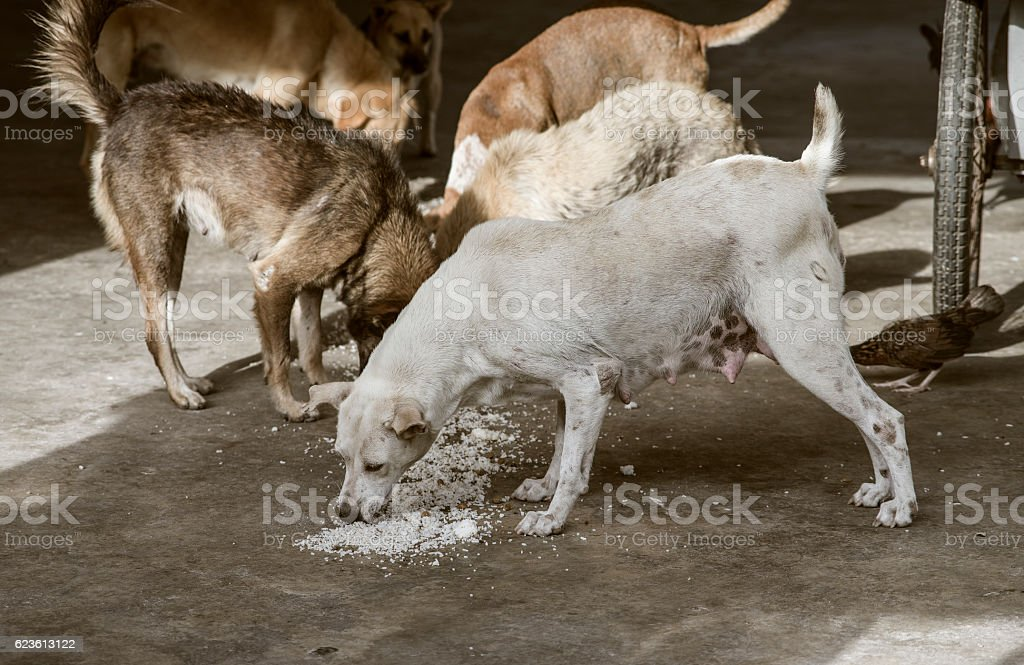 sad looking concept, hungry stray dog stock photo