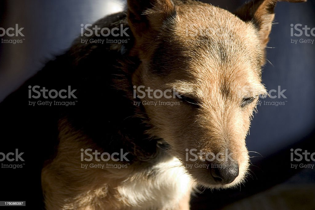Sad looking dog stock photo