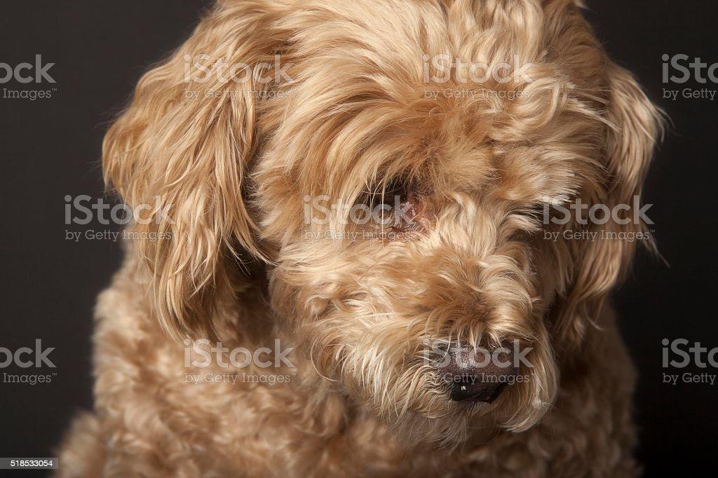 Sad looking dog. stock photo