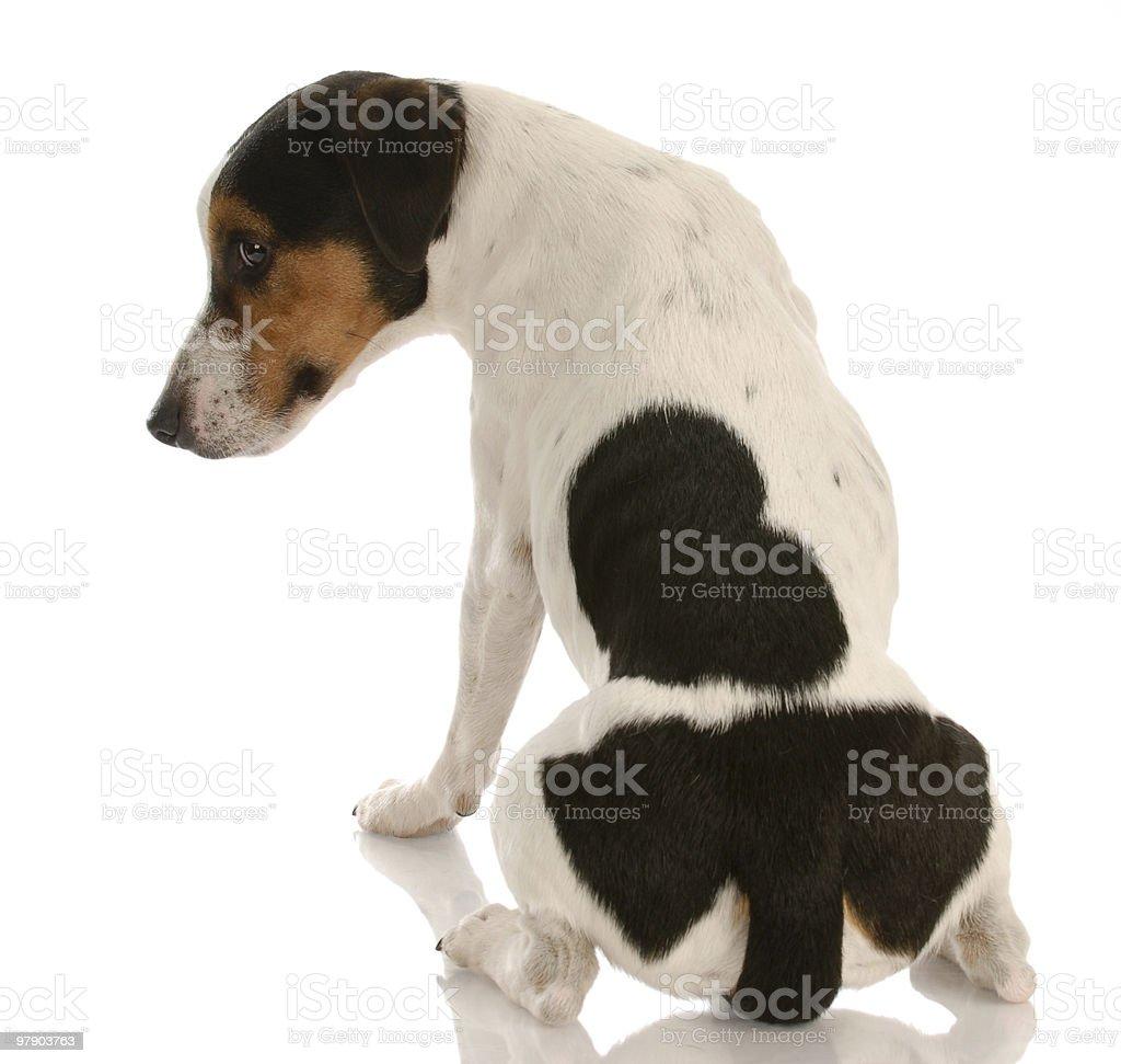 sad looking dog pouting royalty-free stock photo