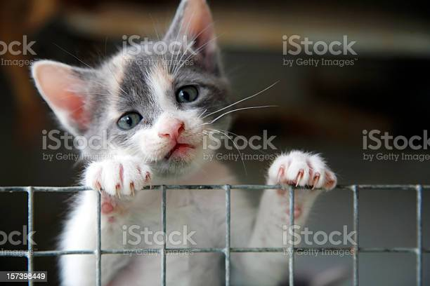 Sad looking kitten trying to climb over a wire fence picture id157398449?b=1&k=6&m=157398449&s=612x612&h=ztmowo9kluufv7xbdlnw5lp3krvgag euclbknkavgg=