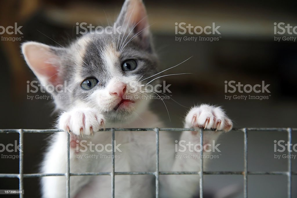 Sad looking kitten trying to climb over a wire fence stock photo