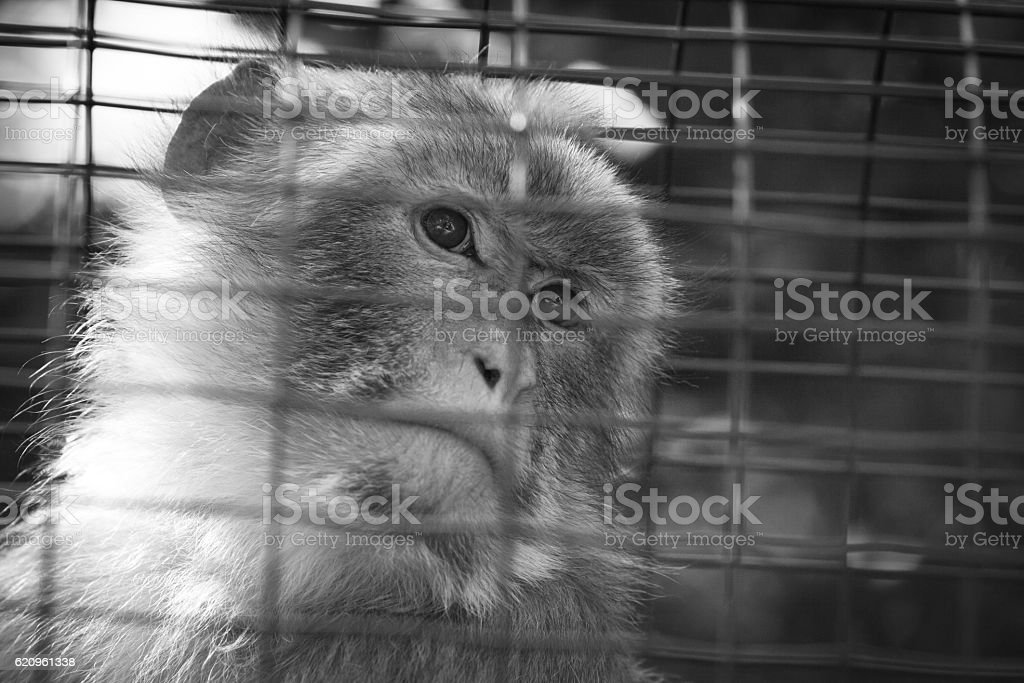 Sad Monkey in a Zoo stock photo