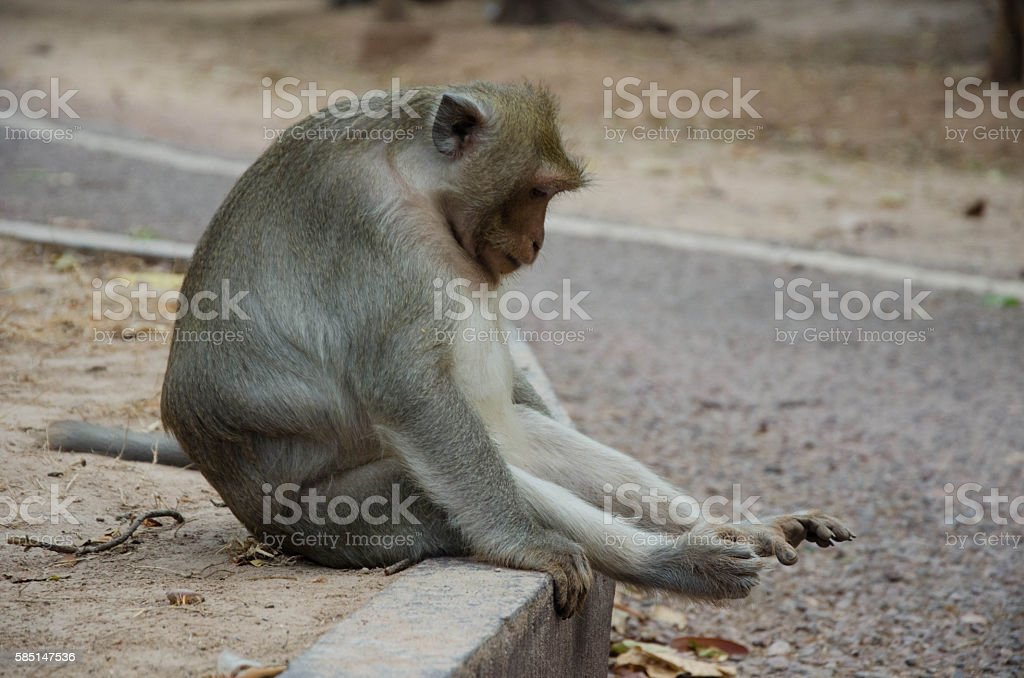 Sad monkey on the side of the road stock photo