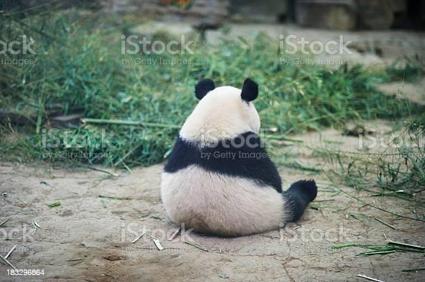 Photo libre de droit de Triste Panda banque d'images et plus d'images libres de droit de Animaux en captivité