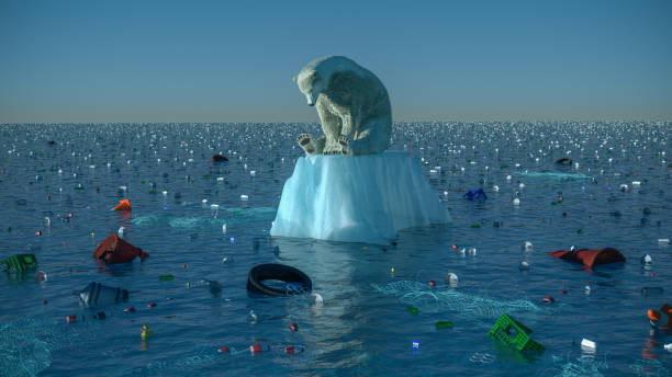 Sad Polar Bear stock photo