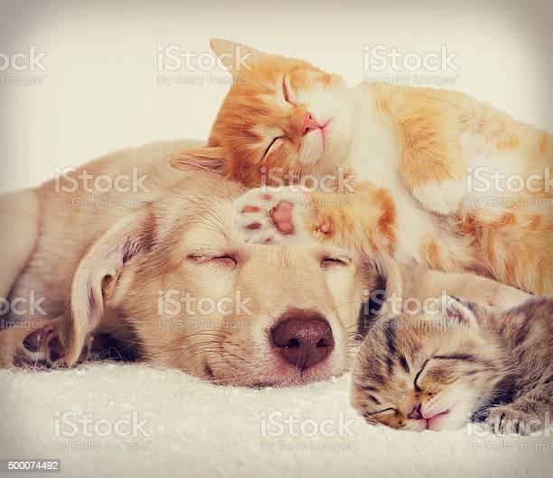 Sad puppy and kitten lying picture id500074492?b=1&k=6&m=500074492&s=612x612&h=qzyikclxc19b0d ozfopojwye5ioi5u1rjrngohkzzu=