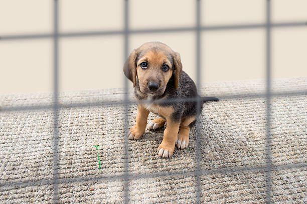 sad puppy in a kennel - animals in captivity stock pictures, royalty-free photos & images