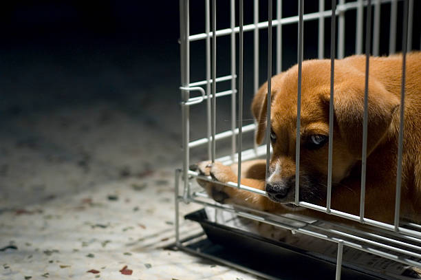 Sad Puppy In Cage stock photo
