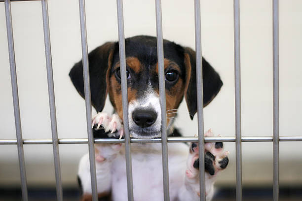Sad Puppy stock photo