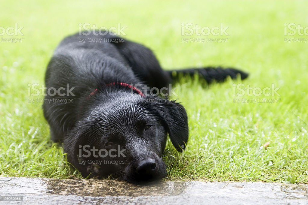 Sad puppy royalty-free stock photo