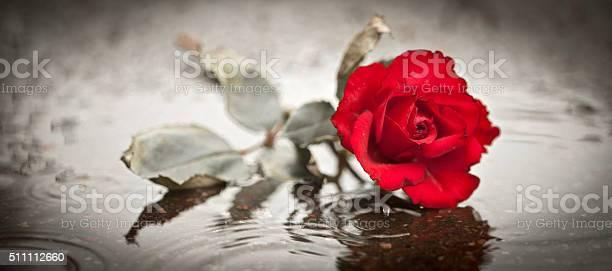 Sad rose picture id511112660?b=1&k=6&m=511112660&s=612x612&h=d rv98lsuhlm07c  ec07hzglx6hvrrtfi 0tmbjmbm=