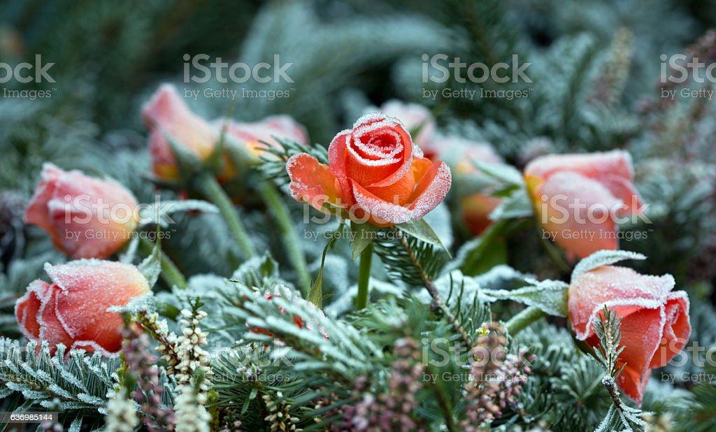 Sad roses bouquet stock photo