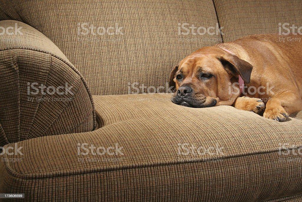 Sad Sick dog stock photo