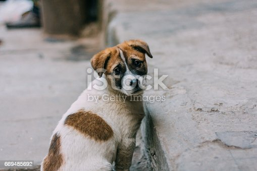 istock Sad white and brown stray dog 669485692