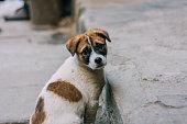 Sad white and brown stray dog
