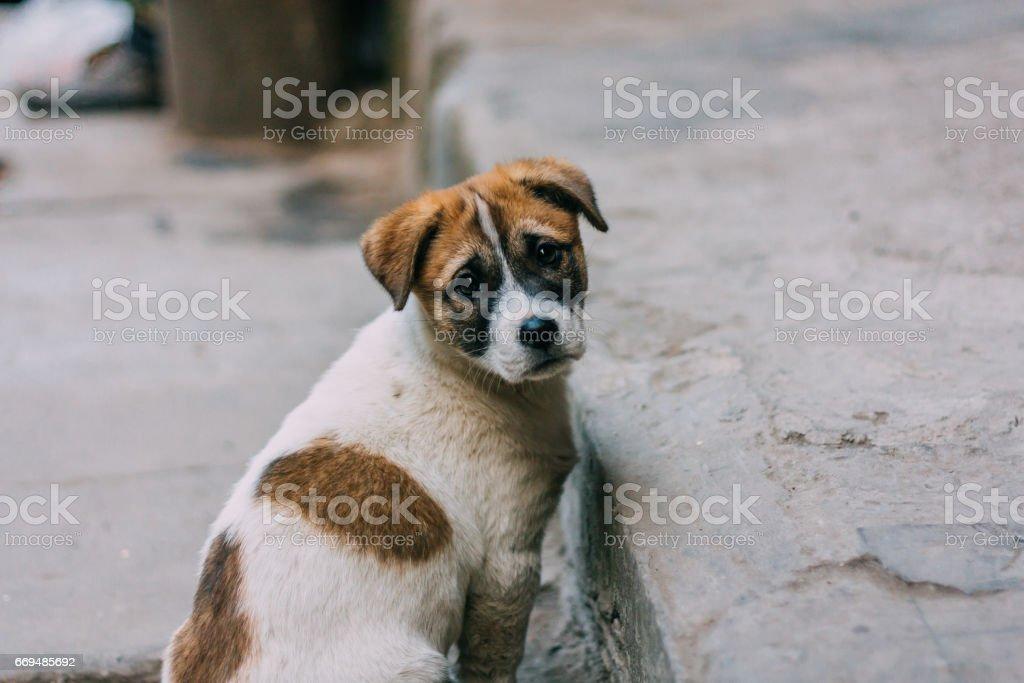 Triste perro blanco y marrón - foto de stock