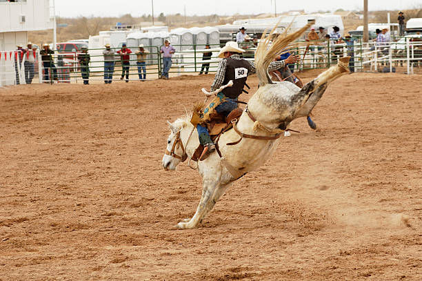 Saddle bronc 1 stock photo