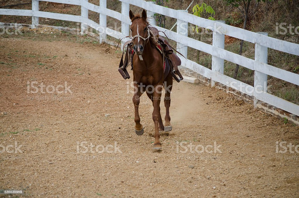 Saddleback mare stock photo