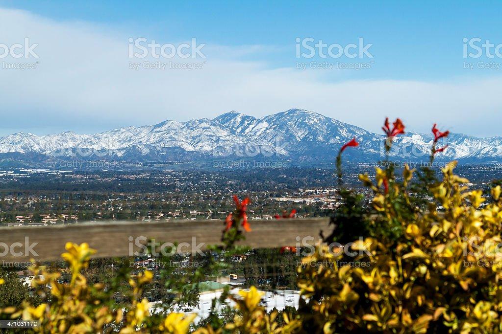 Saddleback Mountain with Flowers stock photo