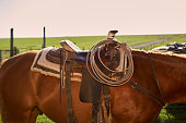 Close up view of saddled horse on sunny day, Kansas, USA