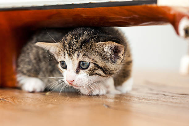 sadness a young cat is trying to pass under a guitar. sad and scared expression scared cat stock pictures, royalty-free photos & images