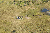 Safari Animals in Okavango Delta