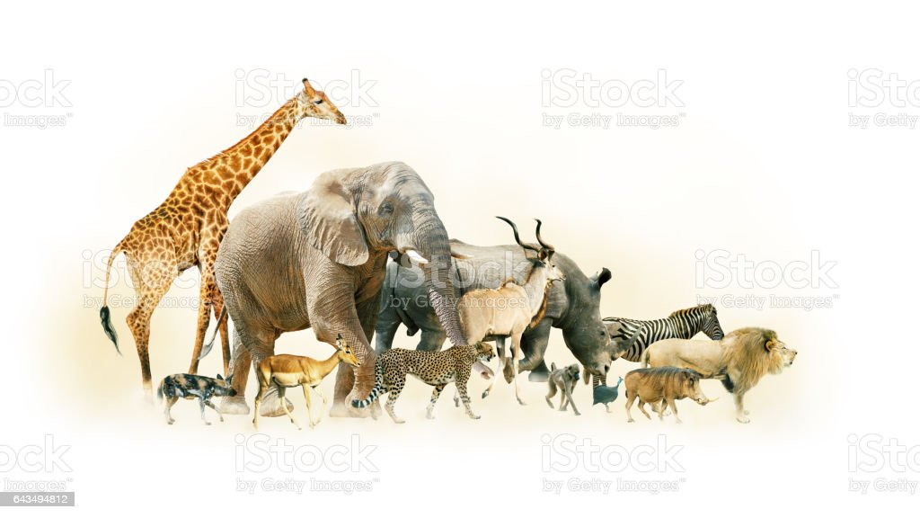 Safari Animals Walking Side Horizontal Banner - foto de stock