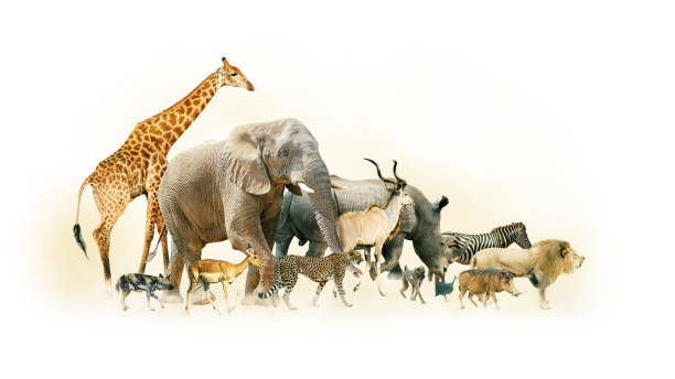safari animals walking side horizontal banner - safari tiere stock-fotos und bilder