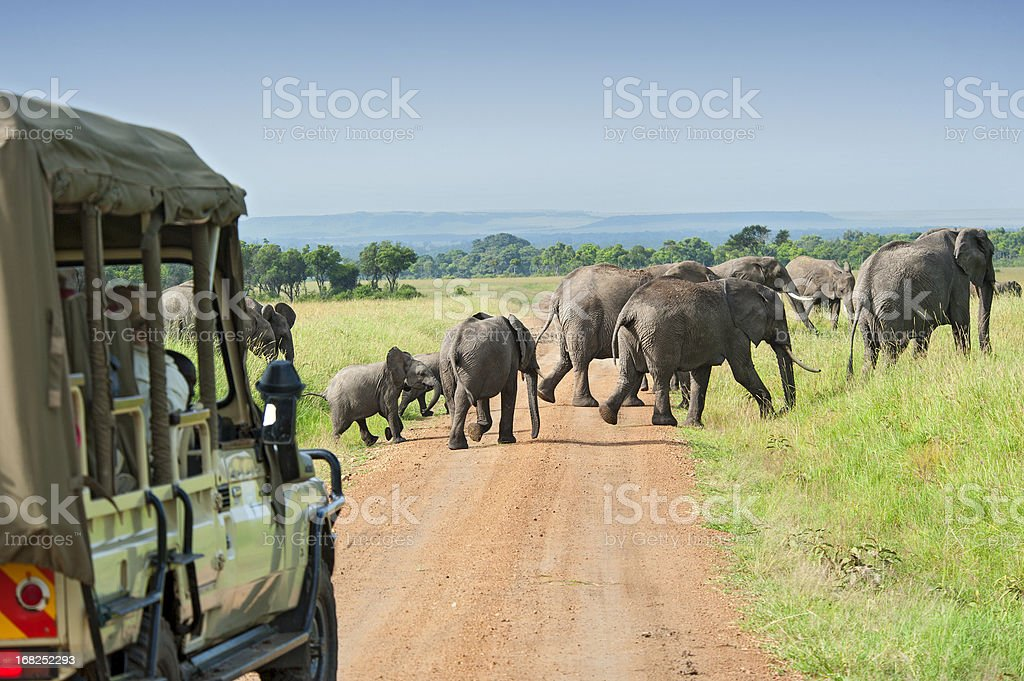 Safari car is waiting for crossing Elephants stock photo