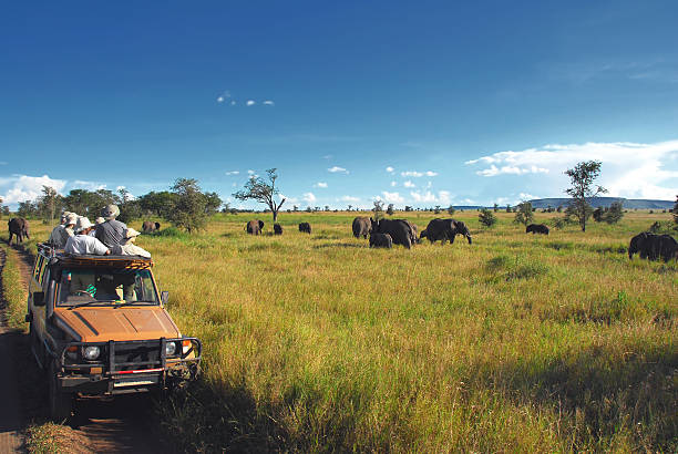 safari goers watching elephants on the serengeti plain, tanzania - safari stock photos and pictures
